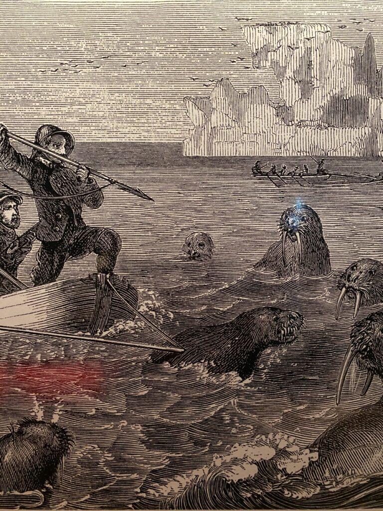 Polowanie na morsy
