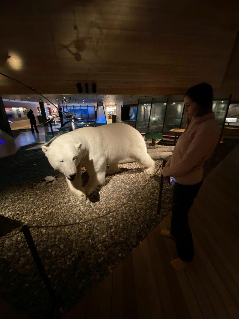 Niedźwiedź w Svalbard Museum